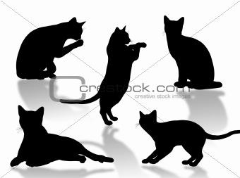 Cat attitudes