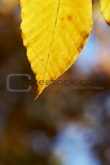 yellow leaf
