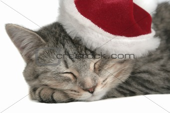 The grey cat sleeps in a New Year&#39;s cap