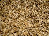 Windblown fallen leaves