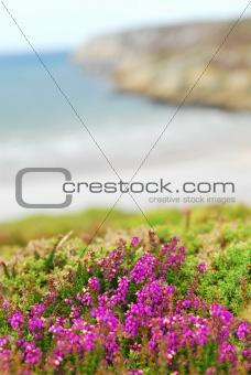 Atlantic coast in Europe