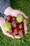 Chestnuts in hands