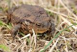 toad or frog in grass