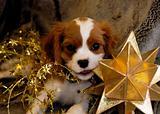 Puppy Star