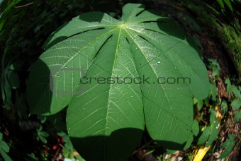 green plant leaf in the parks