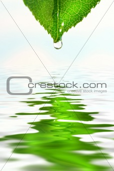 Green leaf over water reflection