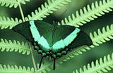 Butterfly on a fern