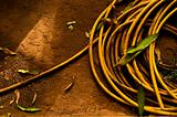 A yellow garden hose