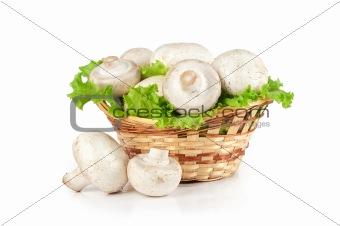 Champignon mushroom in a basket