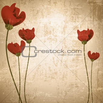 Vintage background with poppies