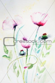 Watercolor pink poppy flowers