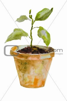 Watercolor illustration of Sprout in a pot