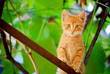 Young kitten sitting on branch