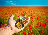 Compass in a Hand / Discovery / Beautiful Day / Red Poppies in N
