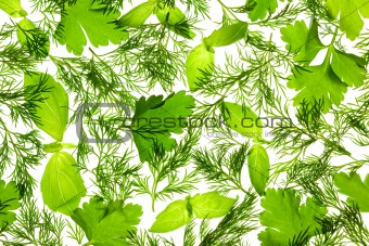 Fresh Basil, Parsley and Dill / background / isolated on white /