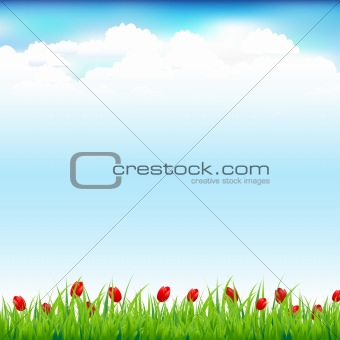 Green Landscape With Grass And Red Tulip