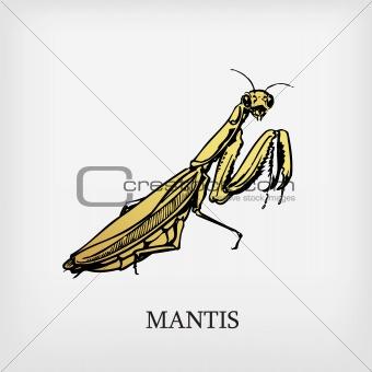 Vector mantis.