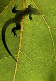 Silhouette of a lizard on a leaf back lit by sunlight