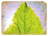 Spring Green Leaf. Old postcard.