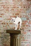Chihuahua on a pedestal