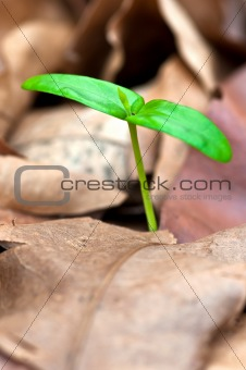 close up of green seedling