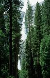Trees and waterfall