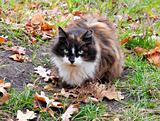 Cat in autumn