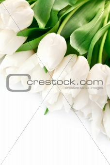bouquet of white tulips with green leaves