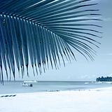 Tropical beach. One-color background image