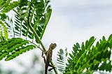 Lizard on the tree in green nature