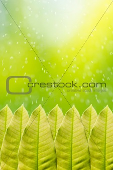 Green leaf and water motion