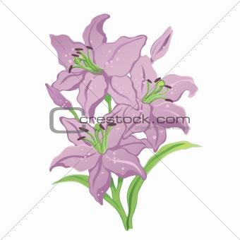 Three purple lilies on stalks with stamens. Vector illustration