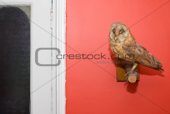 Stuffed owl on a wall