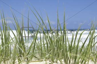 Green beach grass
