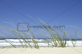Beachside Grass
