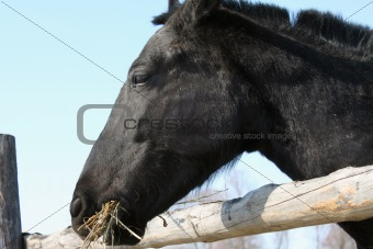 Portrait of a beautiful thoroughbred horse