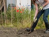 A gardener digging their allotment