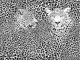 leopard pattern background