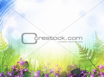 summer meadow with viola flowers