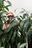 Woman using binoculars behind plant