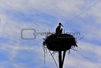Silhouetted stork in the nest