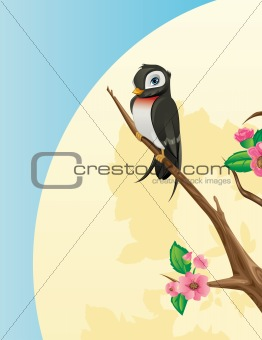 Swallow bird on a cherry tree branch