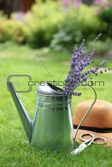 Lavender in watering can in the summer garden