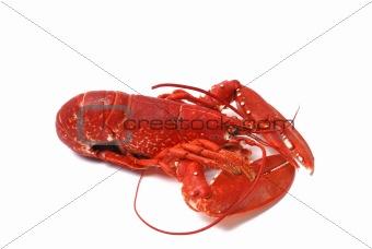 Breton lobster.