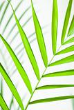 Tropical Leaf Closeup