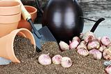 Planting Bulbs