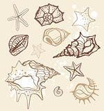 Shells set.