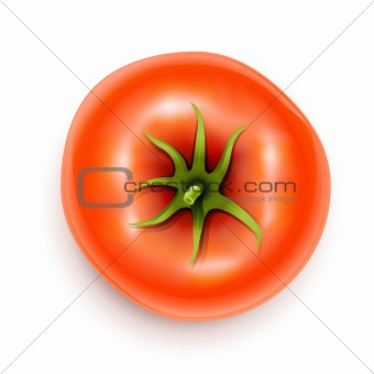 tomato with rootlet top side