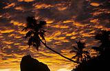 Silhouetted palm tree at sunrise