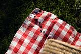 Ants on a picnic blanket